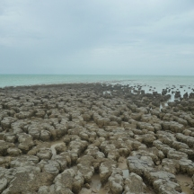 Stromatolites - low tide