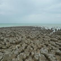 Stromatolites - low tide